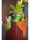 Босоножки кожаные BEFEETGERALD (ИТАЛИЯ) 12320 светло-зеленые